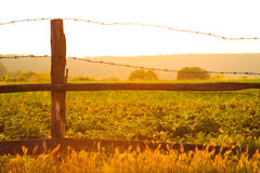 Old wooden fence with barbed wire against the sun Stock Images