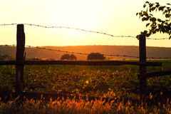 Old wooden fence with barbed wire against the sun Stock Image