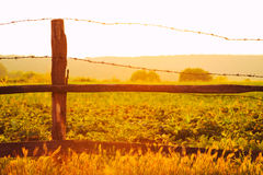 Old wooden fence with barbed wire against the sun Royalty Free Stock Image