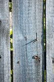 Old wooden fence. With barbed wire on top Stock Photos