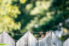 Old wooden fence. With barbed wire on top Royalty Free Stock Image