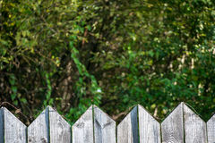Old wooden fence Stock Image