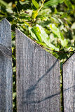 Old wooden fence. With barbed wire on top Stock Image