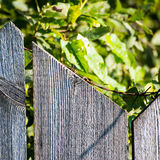 Old wooden fence with barbed wire on top. Square image Stock Images