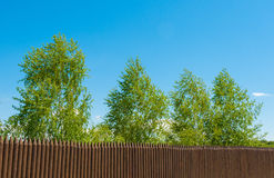 Old wooden fence  and birch on a bluesky background, Russian landscape Stock Images
