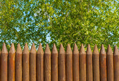 Old wooden fence  and birch on a bluesky background, Russian landscape. Old wooden fence  and trees on the lake coast, Russian landscape Stock Image