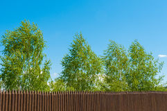 Old wooden fence  and birch on a bluesky background, Russian landscape. Old wooden fence  and trees on the lake coast, Russian landscape Stock Photography