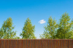 Old wooden fence  and birch on a bluesky background, Russian landscape. Old wooden fence  and trees on the lake coast, Russian landscape Royalty Free Stock Photography