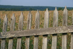 Old wooden fence. Covered with lichen. Behind the fence - field. Russian village Stock Image