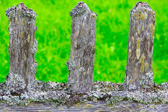 Old wooden fence covered with moss-3 Royalty Free Stock Photo