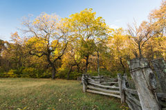 Old wooden fence in a field with trees behind Royalty Free Stock Images