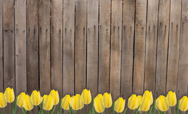 Old wooden fence and flowers. Old wooden brown fence.  Flowers against wooden background. Place for your text Royalty Free Stock Photography
