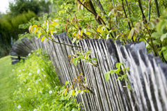 Old wooden fence in the garden Royalty Free Stock Photos