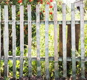 Old wooden fence in garden with plant Stock Image