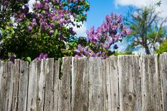 Old wooden fence. In garden with plant Royalty Free Stock Photos