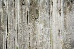 Old wooden fence. In garden with plant Royalty Free Stock Image
