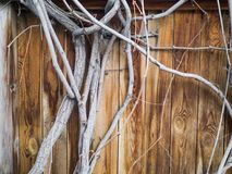 Old wooden fence with grape branches movin on wind, frame for text, copy space. Vintage color.  Royalty Free Stock Images