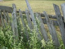 Old wooden fence. Among grass and flowers stock images