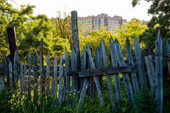 An old wooden fence with grass with green trees Royalty Free Stock Photography