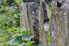 Old wooden fence and green plants royalty free stock image