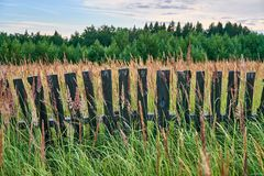Old wooden fence in high grass. Old wooden fence at sunset of the day Royalty Free Stock Photography