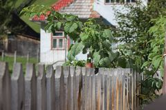 Old wooden fence and house stock photography