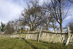 Old wooden fence and leafless trees Royalty Free Stock Photo