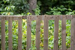 Old wooden fence on the nature. In the park in nature Royalty Free Stock Image