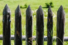 Old wooden fence. Protecting from the green backyard Stock Images