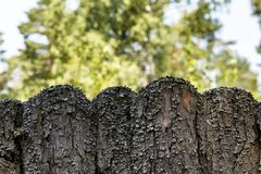 Old wooden fence overgrown with moss. Concept of decay and aging. stock photo