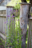 Old wooden fence and plant Royalty Free Stock Photos