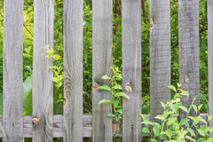 Old wooden fence. Old sparse fence of unpainted laths against the background of green plants Stock Image