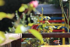 Old wooden fence surrounded by leaves stock images