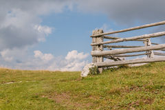 Old wooden fence surrounded by sky. Photo shows old wooden fence surrounded by sky in summer Royalty Free Stock Photo
