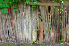 Old wooden fence with tree. Photography of a old wooden fence with tree Stock Photography