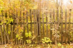 Old wooden fence in the village in autumn.  Stock Photography