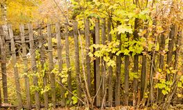 Old wooden fence in the village in autumn.  Stock Photos