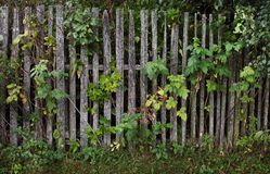 Old wooden fence in the village Stock Photos
