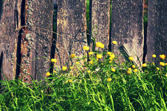 Old wooden fence and yellow flowers background. Stock Photo