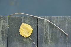 Old Wooden Fence with Yellow Leaf and Twig Royalty Free Stock Photo