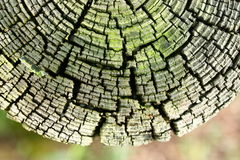 Free Old Wooden Fencepost Stock Images - 21780354