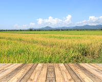 Old wooden floor and Green paddy rice plant and blue sky Stock Photo
