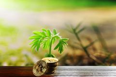 Old wooden floors, silver coins and saplings with morning light. Old wooden floors, silver coins and seedlings with morning light, ideas for saving money for the royalty free stock photos