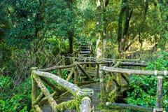 Old wooden foot bridge Royalty Free Stock Photo