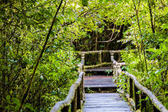 Old wooden foot bridge Royalty Free Stock Photography