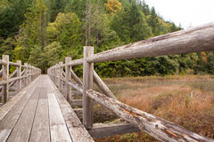An old wooden foot bridge running over a swampy lake Stock Image