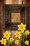 Old wooden frame with bunch of flower narcissus Royalty Free Stock Photography