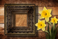 Old wooden frame with bunch of flower narcissus Royalty Free Stock Images