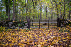 Old wooden gate at autumn Stock Photo