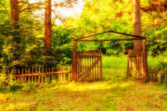 Old wooden gate in forest Stock Photo